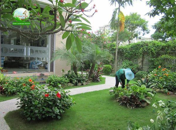 Giới thiệu về dịch vụ trồng cây ở Long An cũng như thiết kế thi công sân vườn hoàn chỉnh