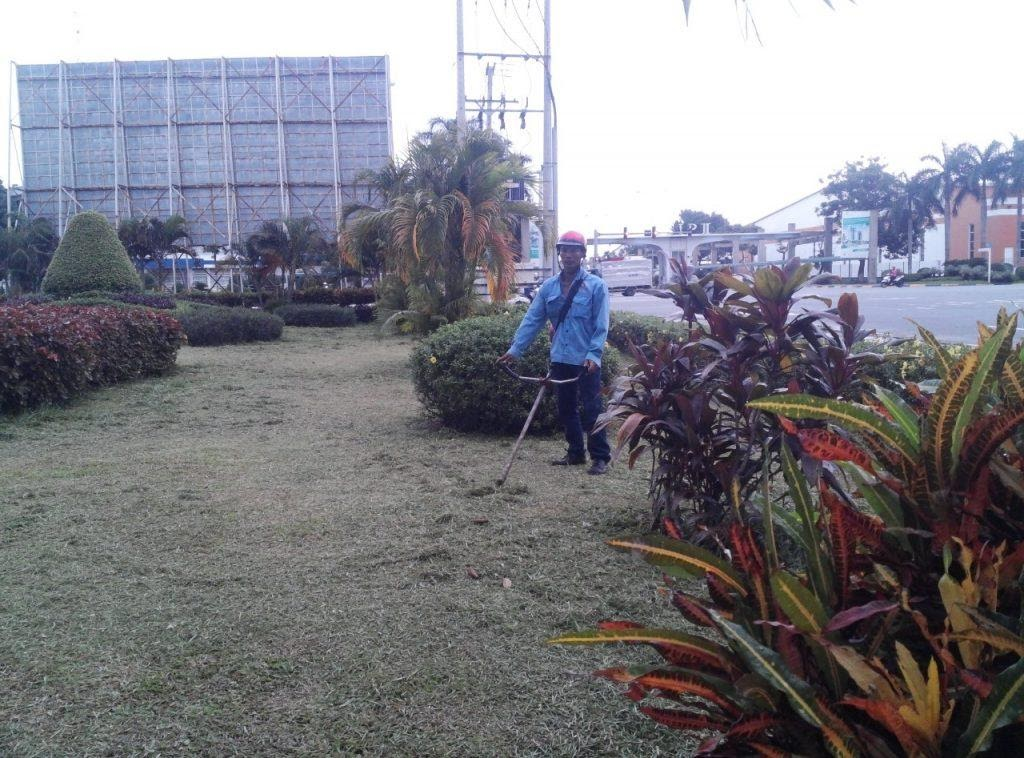 Việc di dời cây xanh ở Tây Ninh khó hay dễ?